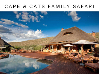 Cape & Cats Safari vacation package