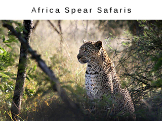 Africa Spear Safaris - Wildlife Tours and Vacations Kruger National Park