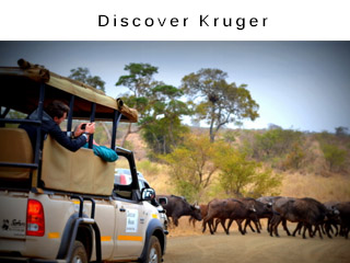 Discover Kruger Safari Tours and Custom Holiday Packages